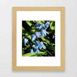Flower Pic 5 Framed Art Print