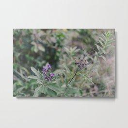 August Wildflowers II Metal Print