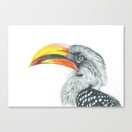 Yellow-billed hornbill Canvas Print