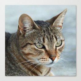Stunning Tabby Cat Close Up Portrait Canvas Print