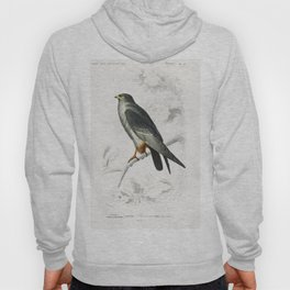 Red-footed Falcon (Falco rufipes) illustrated by Charles Dessalines D Orbigny (1806-1876) Hoody