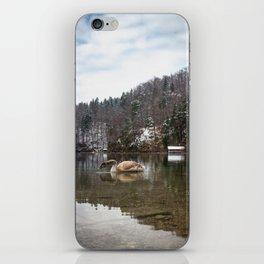 Beautiful scene of swan (lat. Cygnus olor) on the lake iPhone Skin