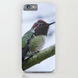 Male Anna's Hummingbird No. 2 iPhone Case