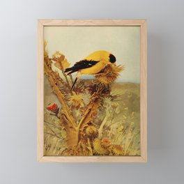 Neltje Blanchan - Bird Neighbours (1903) - Goldfinch Framed Mini Art Print