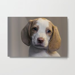 Tay the Beagle Metal Print