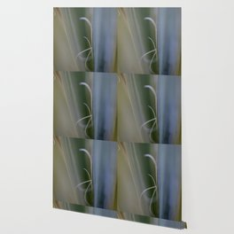 California Cactus Up Close Wallpaper