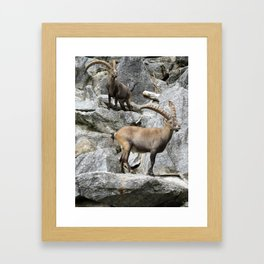 Ibex 2 Framed Art Print