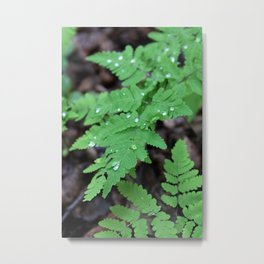 Northern Oak Ferns and Raindrops 3 Metal Print