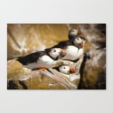 Puffin with Lunch Canvas Print