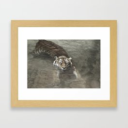 Tiger Lazing in the Water Framed Art Print