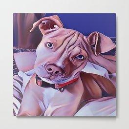 The American Pit Bull Terrier Metal Print