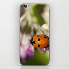 Ladybird in Spring iPhone & iPod Skin