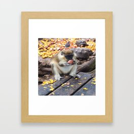 Green Monkey Munching Framed Art Print