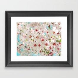 Cherry Blossom afternoon Framed Art Print