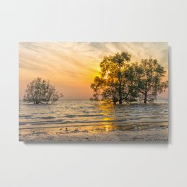 Sunrise over mangrove trees Metal Print