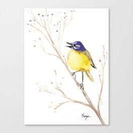 Yellow Wagtail Canvas Print