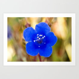 Desert Bluebell Alternate Perspective Art Print