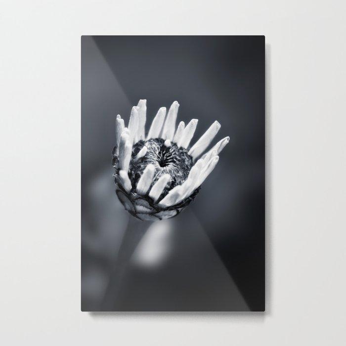 LIFE IN MONO - FILIGREE Metal Print
