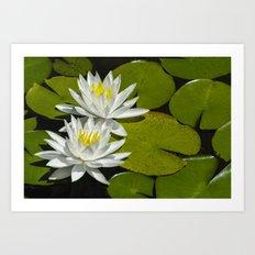 Two Water Lilies Art Print