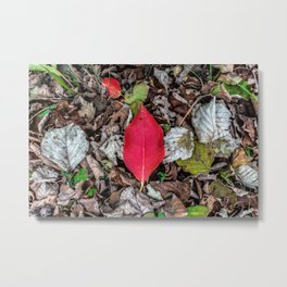 Persimmon tree red leaf Metal Print