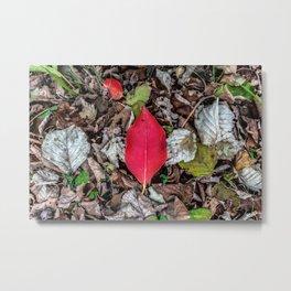 Persimmon tree red leaf Metal Print