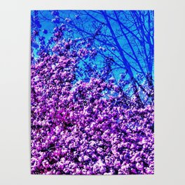 Spring View Poster