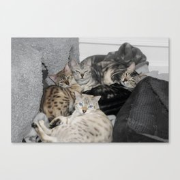 Bengal Cat Kitty Pile  Canvas Print