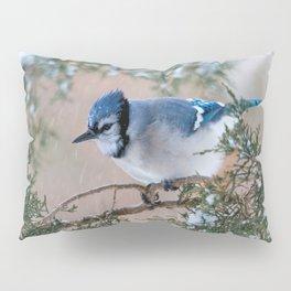 Hunkered Down (American Blue Jay) Pillow Sham