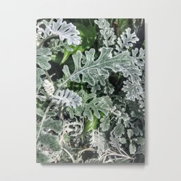 Chinese Evergreen Metal Print