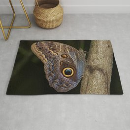 Owl butterfly in Costa Rica - Tropical moth Rug