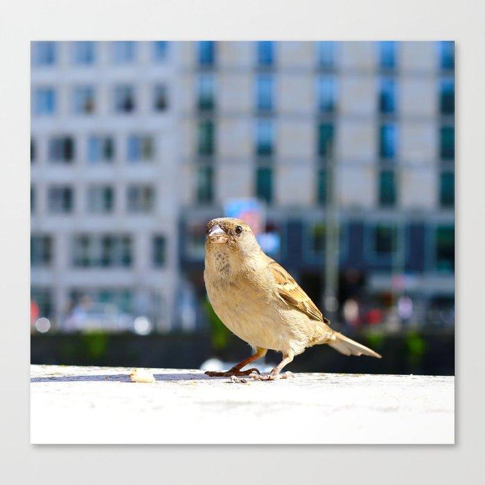 City Bird Lovely Sparrow Canvas Print