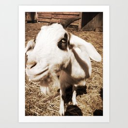 Close Up Goat Art Print