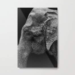 ELEPHANT GAZE Metal Print