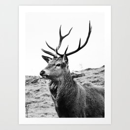 The Stag on the hill - b/w Art Print