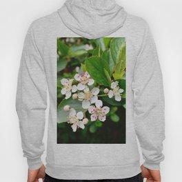 Chokeberry Flowers Hoody
