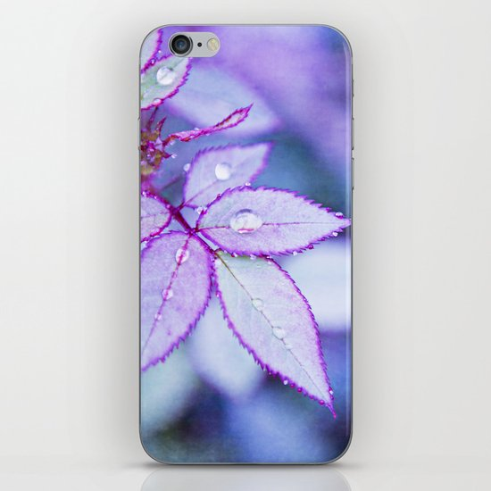 Lilac Rim iPhone & iPod Skin