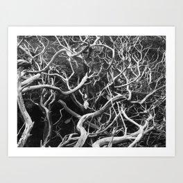tangled branches  Art Print