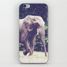 Saunter iPhone & iPod Skin