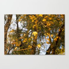 The Leaves Above - Yellow Maple Canvas Print