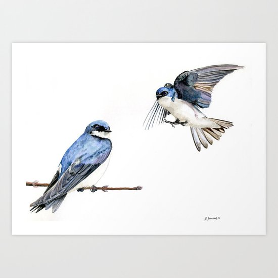 Swallows Art Print
