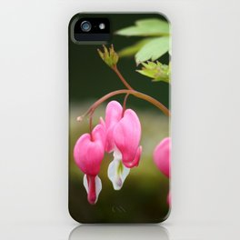 bleeding heart flower iPhone Case