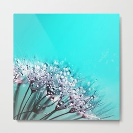 Dandelion With Water Crystals Metal Print