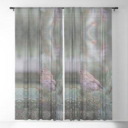 Backyard Visitor ~ I Sheer Curtain