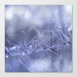 FROST Canvas Print