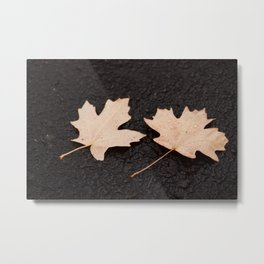 Maple Leaves Photography Print Metal Print