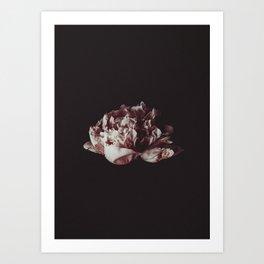 Peony Art Print