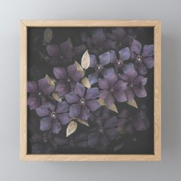 Faded Clematis in Purple Framed Mini Art Print