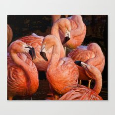 Flamingo lingo Canvas Print