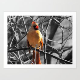 Red Female Cardinal on Black and White Trees Modern Farmhouse Picture USA A841 Art Print