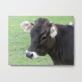 #406 7 2 13 nature cow hobby farm bitterroot mt Metal Print